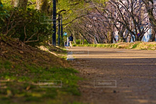公園の舗装路の写真・画像素材[4234368]