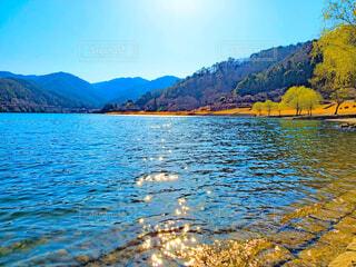八千代湖の春の写真・画像素材[4270899]