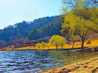 八千代湖の春の写真・画像素材[4270900]