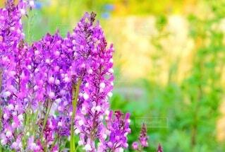 夕日の中の花たちの写真・画像素材[4320555]