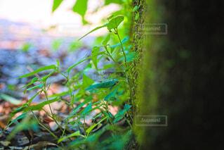 道端の雑草の写真・画像素材[4593879]