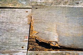 腐った板の写真・画像素材[4593886]