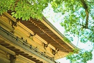神門と樹木の写真・画像素材[4681855]
