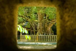 灯籠から覗いた楠の写真・画像素材[4683707]