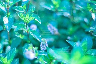 雑草のクローズアップの写真・画像素材[4704207]