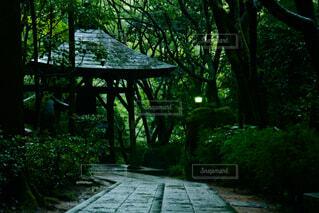 雨の日の参道の写真・画像素材[4743291]