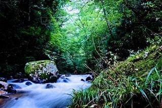 岩と清流と緑の写真・画像素材[4769405]