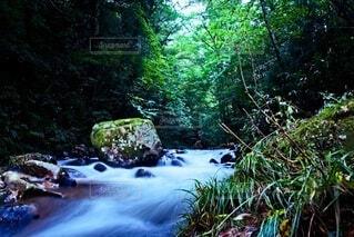 岩と清流と緑の写真・画像素材[4769403]