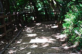 原始の森への入り口の写真・画像素材[4791624]