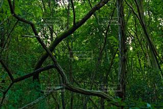 折れ曲がった木々の写真・画像素材[4822419]