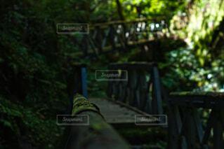 渓谷の奥まで誘う光と橋の写真・画像素材[4859503]