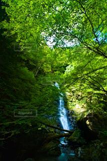 瀬戸の滝の写真・画像素材[4859520]