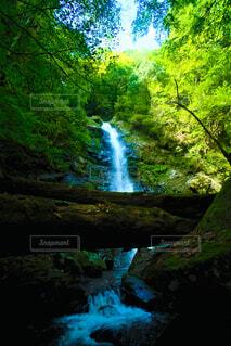 大木の先にある瀬戸の滝の写真・画像素材[4859521]