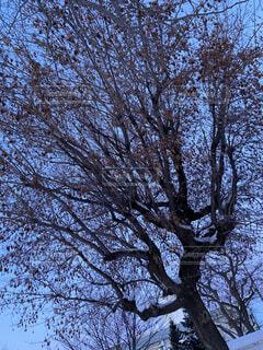 木のクローズアップの写真・画像素材[4037234]