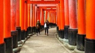 伏見稲荷大社の真っ赤な鳥居の写真・画像素材[4023591]
