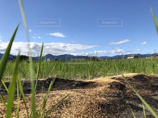稲刈りをした後の田んぼと青空の写真・画像素材[4957693]