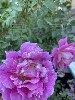 花のドアップの写真・画像素材[4021061]
