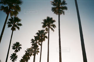 空の写真・画像素材[427324]