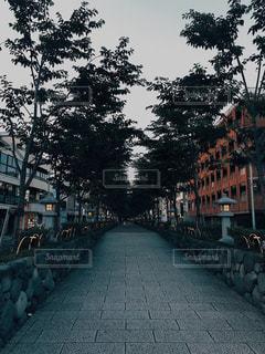 地元 鎌倉 段葛の写真・画像素材[2262436]