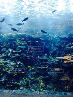魚の写真・画像素材[168853]