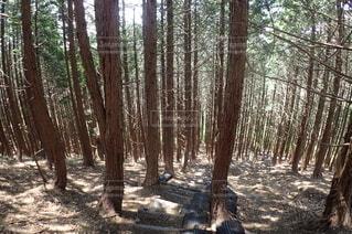 迷いの森の写真・画像素材[4023963]