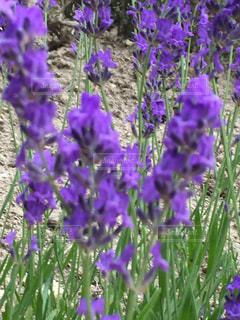 お花畑の写真・画像素材[171514]