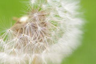 花の写真・画像素材[169046]