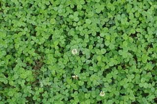 植物のクローズアップの写真・画像素材[3130657]