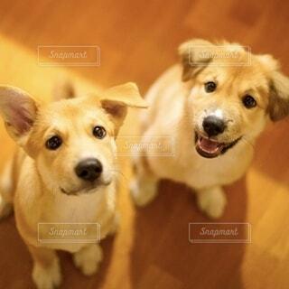 2頭の犬の写真・画像素材[4030623]