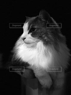 猫の写真・画像素材[4049572]