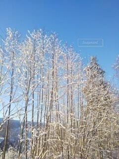 青空に映える雪に覆われた木々の写真・画像素材[4029317]