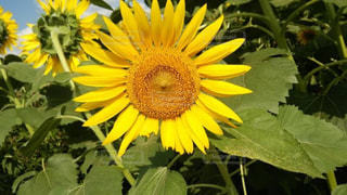 花の写真・画像素材[173884]