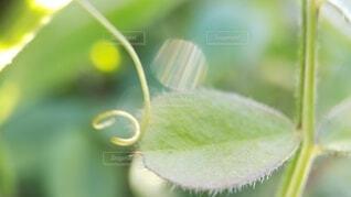 草のクローズアップの写真・画像素材[4059213]