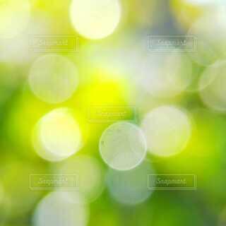 葉っぱのぼかしの写真・画像素材[4133386]