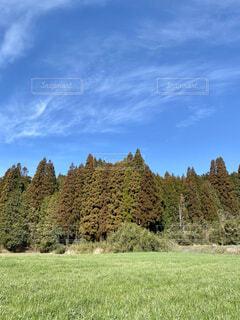 木立の眺めの写真・画像素材[4203823]