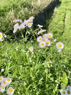 野草のクローズアップの写真・画像素材[4314809]