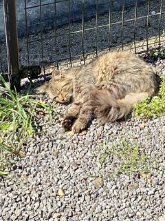 ひなたぼっこする野良猫の写真・画像素材[4348819]