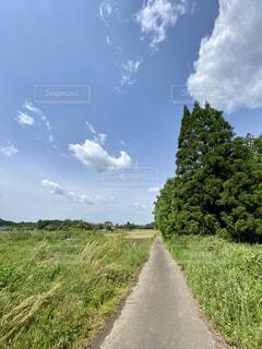 散歩道の写真・画像素材[4378015]