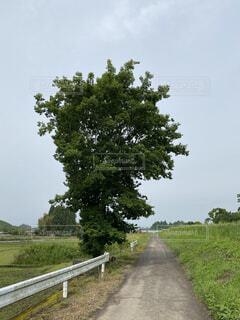 道路脇の木の写真・画像素材[4401882]