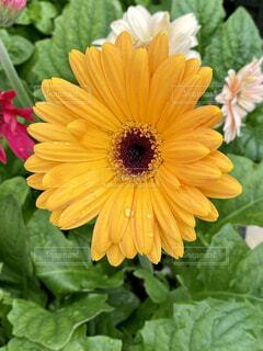 花のクローズアップの写真・画像素材[4440388]
