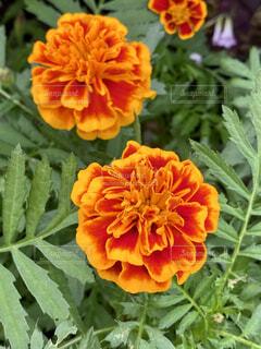 花のクローズアップの写真・画像素材[4516677]