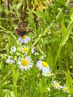 花とチョウの写真・画像素材[4524143]