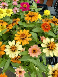 花のクローズの写真・画像素材[4528906]