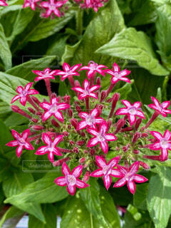 花のクローズアップの写真・画像素材[4533503]