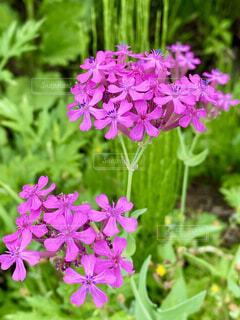 花のクローズアップの写真・画像素材[4545333]