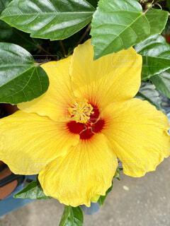 花のクローズアップの写真・画像素材[4549062]