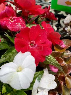 花のクローズアップの写真・画像素材[4553529]