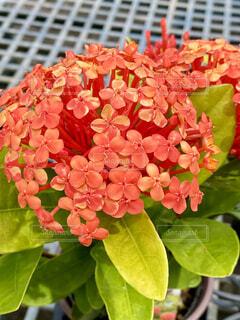 花のクローズアップの写真・画像素材[4560017]