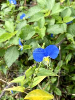 花のクローズアップの写真・画像素材[4831846]