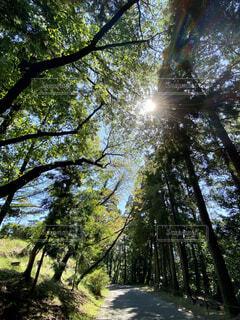 森の中の木の写真・画像素材[4926707]